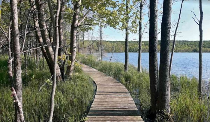 Snake Trail Boardwalk